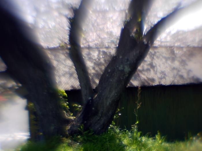 P1030760a.jpg